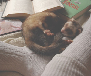 book, ferret, and cute image