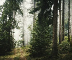 clouds, forest, and photo image