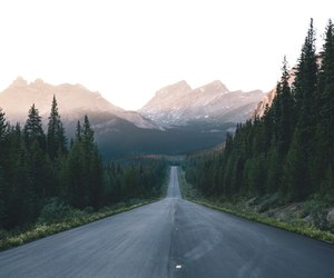 forest and road image