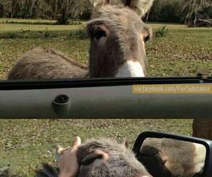 donkey, cute, and funny image