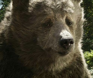 2016, bear, and jungle book image