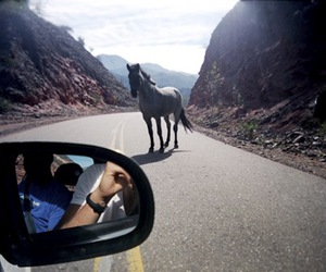 horse, wild, and roadtrip image