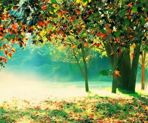 colourful, forest, and green image