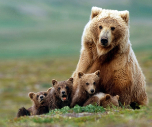 bear, animal, and cub image