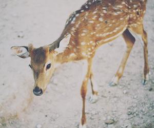 deer, animal, and photography image