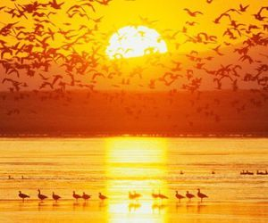 birds and nature image