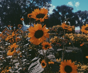 sunflower, flowers, and tumblr image