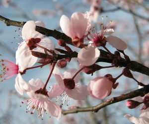 blossom, buds, and earth image