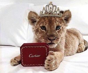 lion, animal, and cartier image