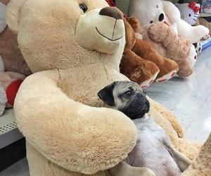 adorable, animal, and pug image