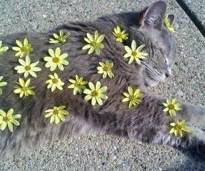 cat, flowers, and yellow image