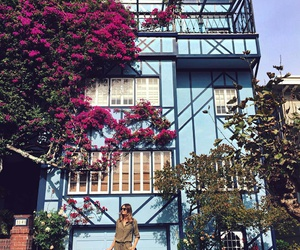 california, flowers, and house image
