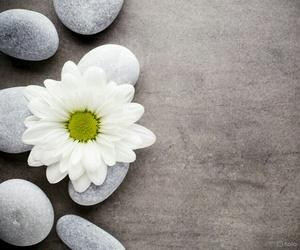 flor, flower, and fondo image