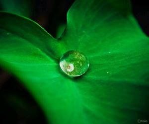 flor, fondo, and verde image