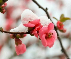 flor, invierno, and naturaleza image