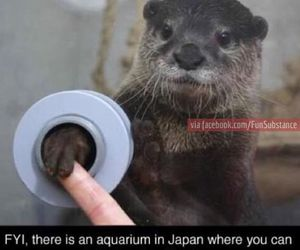 otter and funny image