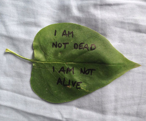 leaves, grunge, and dead image