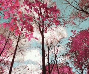 Image by Lili