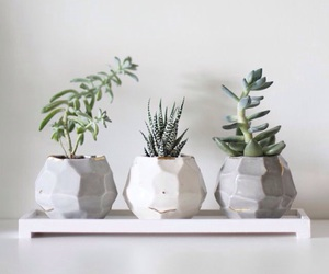 plants, decor, and aesthetic image