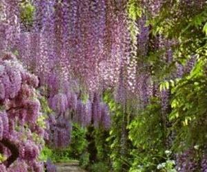 bohemian, boho, and purple image