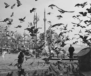 b&w, ortakoy, and black and white image