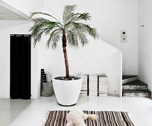 white, home, and dog image