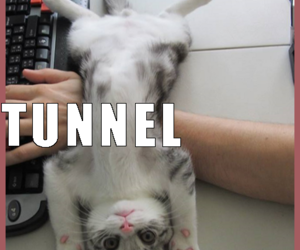 cat, funny cats, and cat fun image