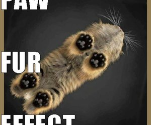 cat, cat paws, and meow cats image