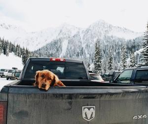 dog, car, and mountains image