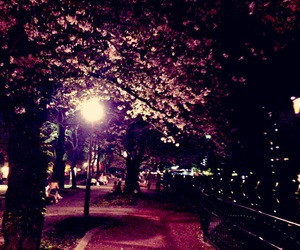 cherryblossom and love image
