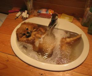 dog, funny, and water image