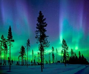 nature, tree, and aurora image