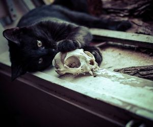 cat, skull, and black image