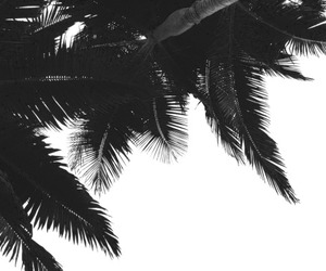 palms, black and white, and nature image