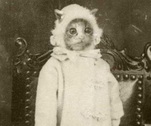 cat, funny, and vintage image