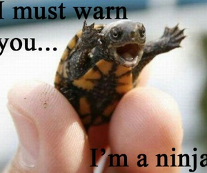 ninja, turtle, and funny image