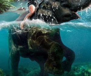 animals, riding, and elephants image