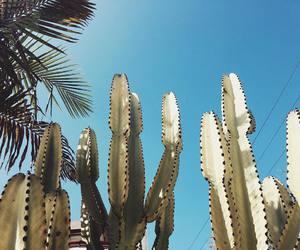 cacti, cali, and desert image