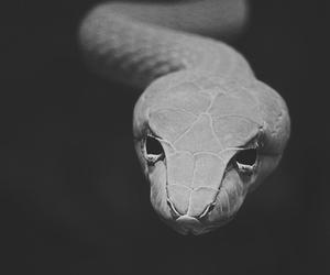 snake, animal, and black and white image