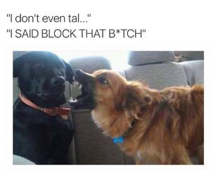 dog, funny, and bae image
