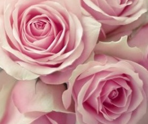 flores, tumblr, and fleurs image