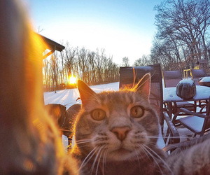 cat and selfie image