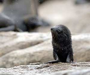 cute and seal pup image
