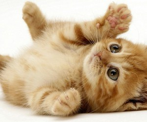 kitten, little, and cute image