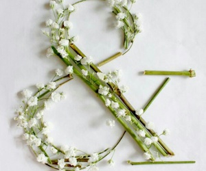 ampersand, and, and baby's breath image