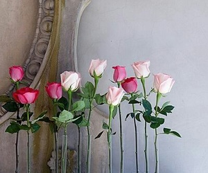 flowers, pink roses, and fresh cut flowers image