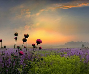 flowers, sunset, and landscape image