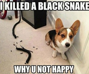 dog, funny, and snake image