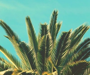 palm tree, summer, and waves image