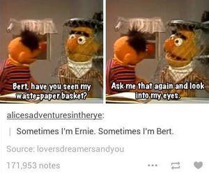 funny, tumblr, and bert image